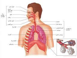 پاورپوینت سیستم تنفس (ویژه ارائه کلاسی رشته های تربیت بدنی و علوم ورزشی)